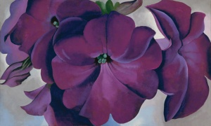 Georgia O'Keeffe, American (1887-1986), Petunias, 1925, oil on hardboard panel, 18 x 30 in., Fine Arts Museums of San Francisco, Museum purchase, Gift of the M. H. de Young Family, © Georgia O'Keeffe Museum.